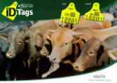 MSD Cattle product diary
